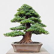 Matsudamitsuo_0212thumb597x600544