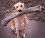 Dogandbone