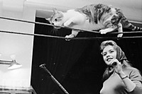 Celebrities_and_cats_05
