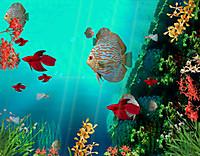 Coralreefaquarium3d_1