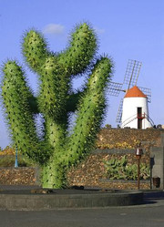 Jardindecactusentrada