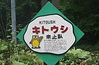 Kitousi