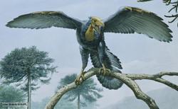 Archaeopteryx_12