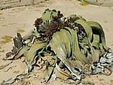 Namibia_2006_1153654200_pict0434
